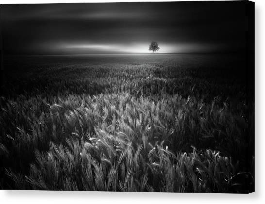 Wind Farms Canvas Print - Bucolic Sunrises #2 by Luca Rebustini