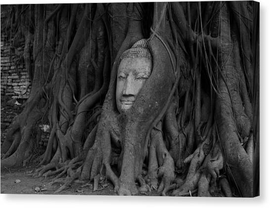 Buddha Head In Roots Of Bodhi Tree Canvas Print by Zestgolf