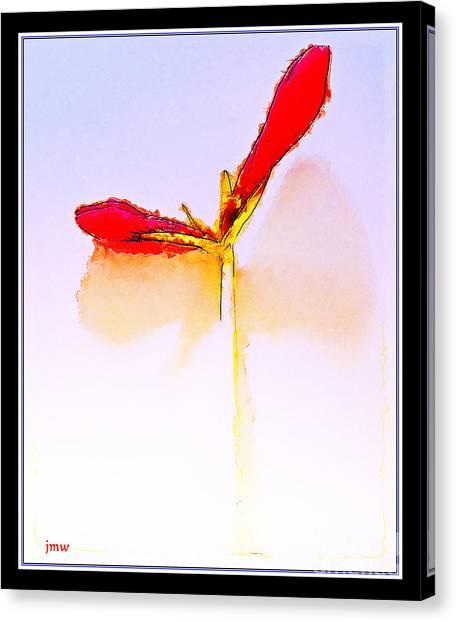 Budding Amaryllis  Canvas Print by Joseph Welsh