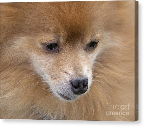 Buddy Canvas Print