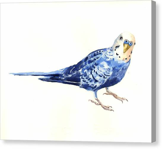 Parakeets Canvas Print - Budgie Bow by Alison Fennell