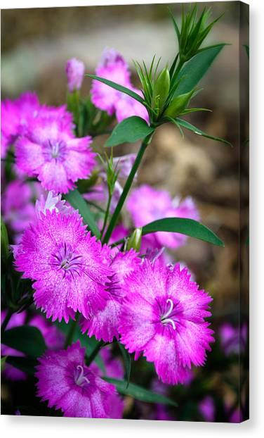 Buds And Blooms 1 Canvas Print