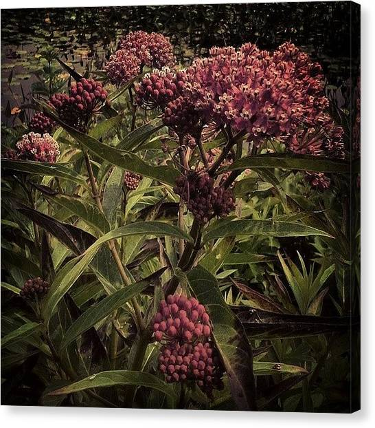 Wetlands Canvas Print - Buds Forever by Milk R