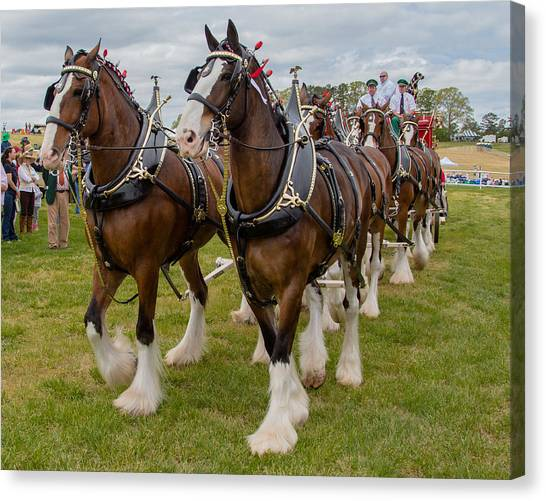 Canvas Print featuring the photograph Budweiser Clydesdales by Robert L Jackson