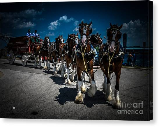 Budweiser Clydesdales Canvas Print