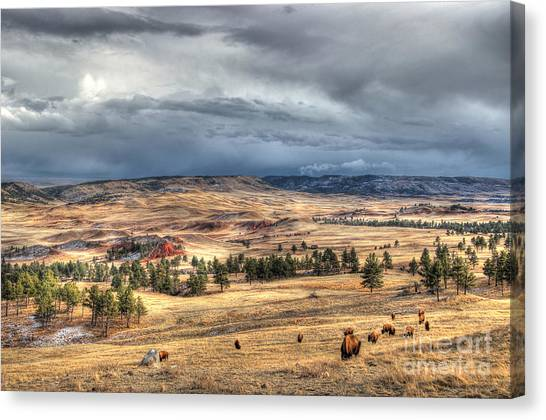 Buffalo Before The Storm Canvas Print