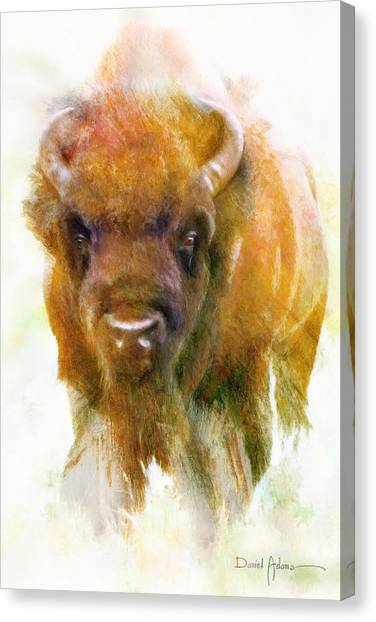 Da176 Buffalo II Daniel Adams Canvas Print
