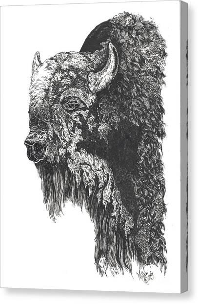 Buffalo In Spring Canvas Print