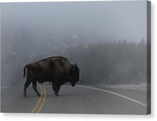 Buffalo In The Mist Canvas Print