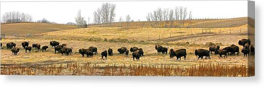 Buffalo Late Fall Canvas Print