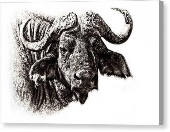 Rhinocerus Canvas Print - Buffalo Sketch by Mike Gaudaur