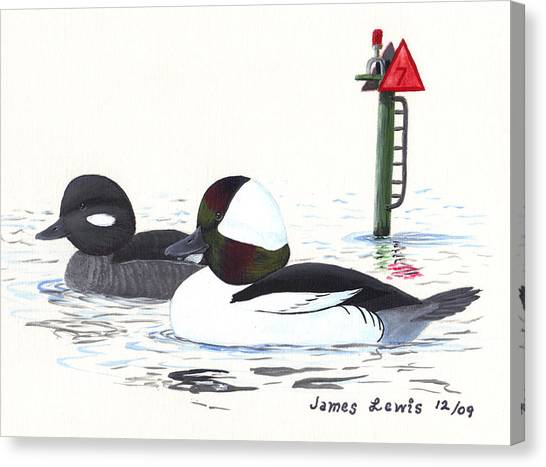 James Lewis Canvas Print - Bufflehead Pair On A Calm Afternoon by James Lewis