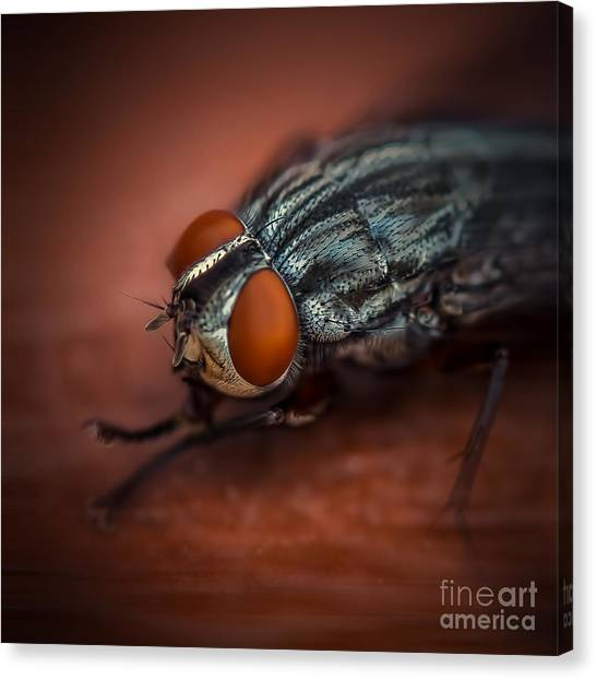 Bug Eyed  Canvas Print