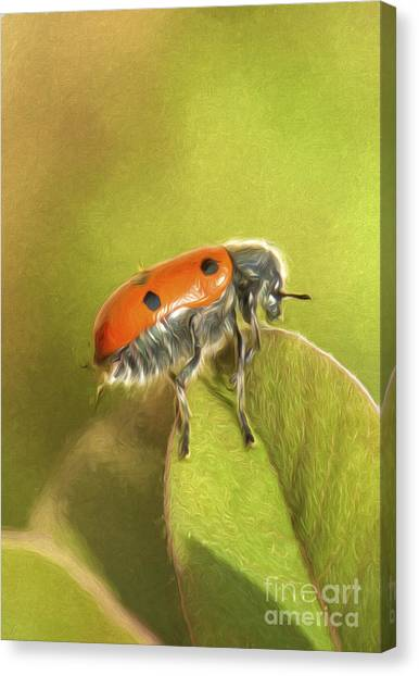 Bug On Leave Canvas Print