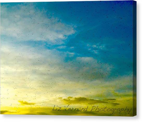 Gnats Canvas Print - Bugs At Sunset by Liz Vernand