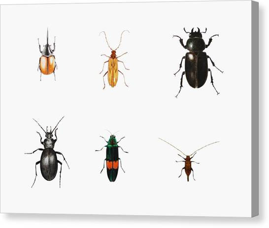 Bugs Canvas Print - Bugs by Ele Grafton