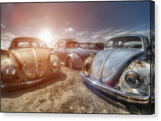 Bugs In The Sun Canvas Print