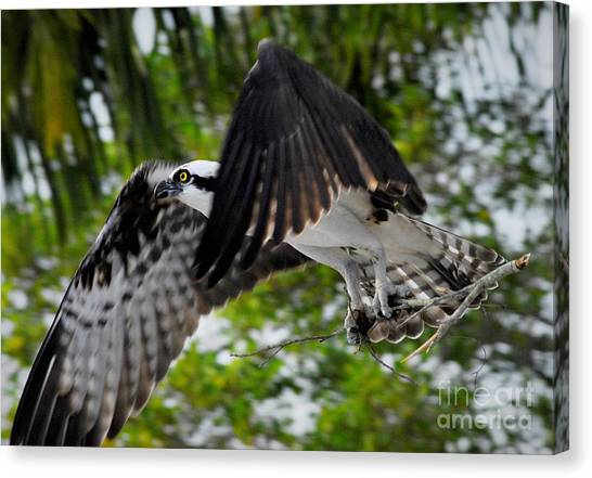 Osprey Canvas Print - Building For The Future by Quinn Sedam