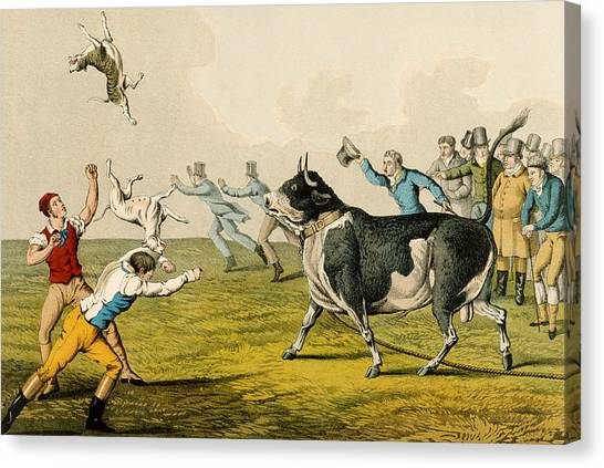 Mastiffs Canvas Print - Bull Baiting, Pub. By Thomas Mclean by Henry Thomas Alken
