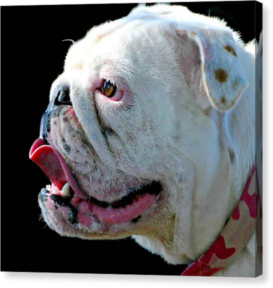 English Bull Dogs Canvas Print - Bull by Diana Angstadt