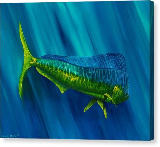 Bull Dolphin Canvas Print