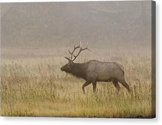 Bull Elk On Foggy Morning Along Madison Canvas Print by Adam Jones