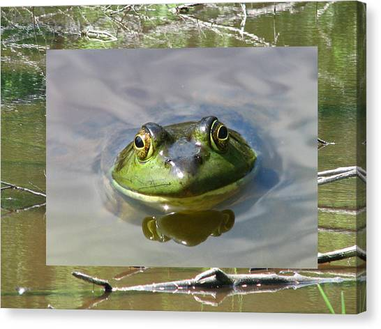 Bull Frog And Pond Canvas Print