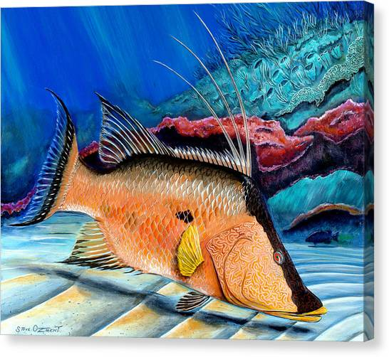 Bull Hogfish Canvas Print