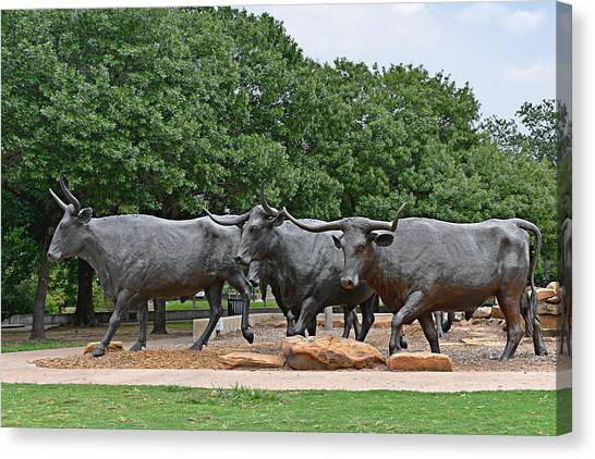 Animals Canvas Print - Bull Market by Christine Till