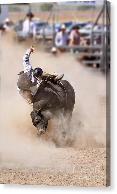 Bull Riding Canvas Print - Bull Riding by Delphimages Photo Creations