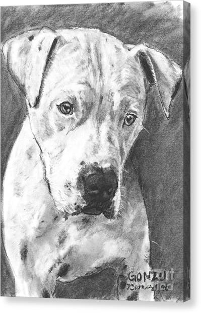 Bull Terrier Sketch In Charcoal  Canvas Print