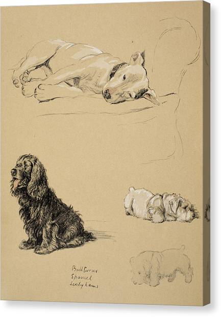 Cocker Spaniels Canvas Print - Bull-terrier, Spaniel And Sealyhams by Cecil Charles Windsor Aldin