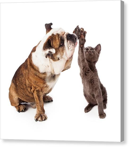 Bulldog And Kitten High Five  Canvas Print by Susan Schmitz