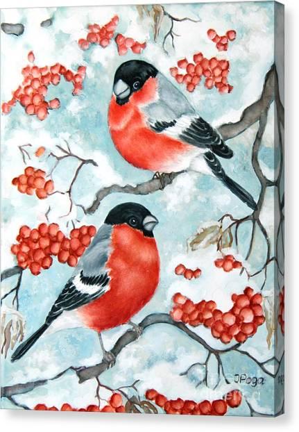 Bullfinch Couple Canvas Print