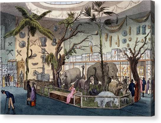 Natural History Museum Canvas Print - Bullocks Museum, 22 Piccadilly, London by English School