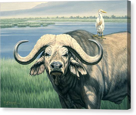 Egret Canvas Print - 'bullrider'   by Paul Krapf