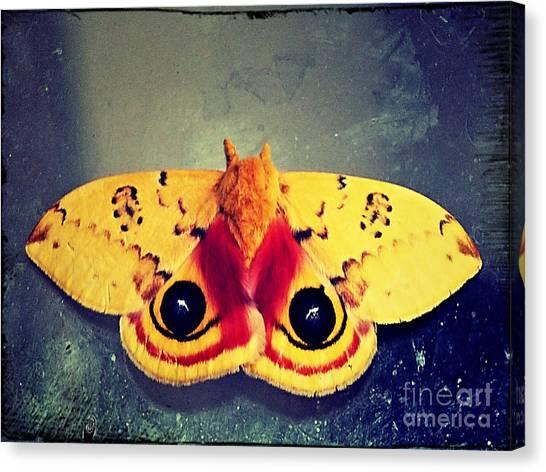 Bullseye Moth Canvas Print