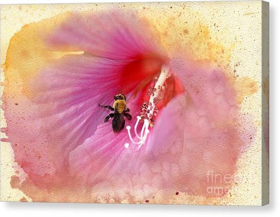 Althea Canvas Print - Bumble Bee Bliss by Betty LaRue