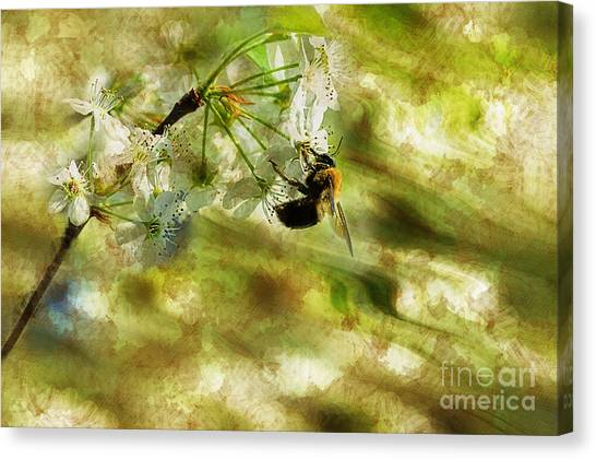 Bumble Bee Eating Sweet Nectar Canvas Print by Dan Friend