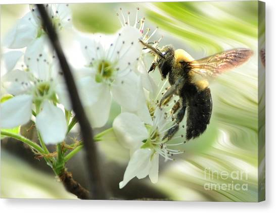Bumble Bee On Flower Canvas Print by Dan Friend