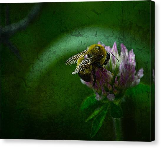 Bumble Bee Tattered Wings Art 2 Canvas Print