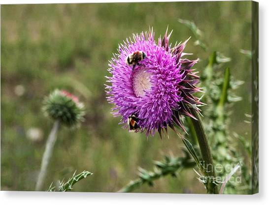 Canvas Print featuring the photograph Bumble Bees by Mae Wertz