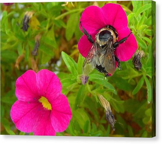 Bumblebee Hug Canvas Print