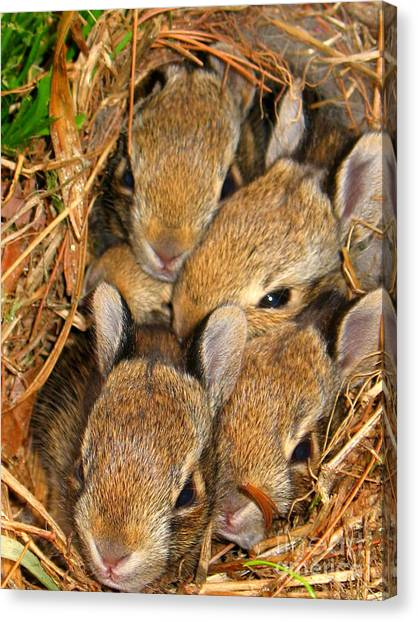 Canvas Print featuring the photograph Bunny Babies by Patti Whitten
