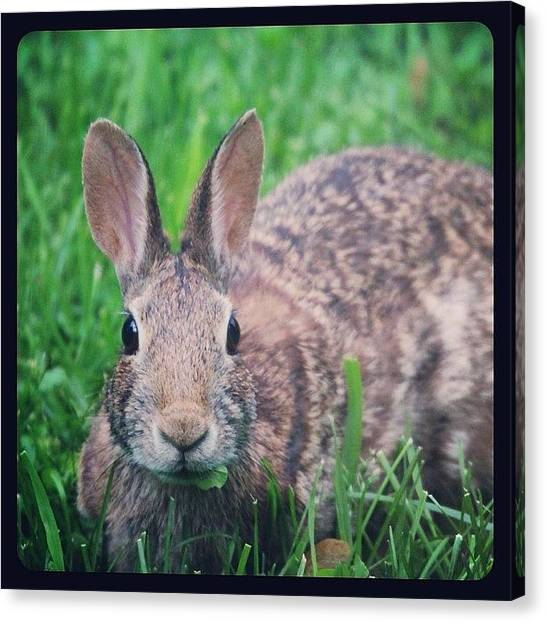 Small Mammals Canvas Print - #bunny #rabbit by Heidi Hermes