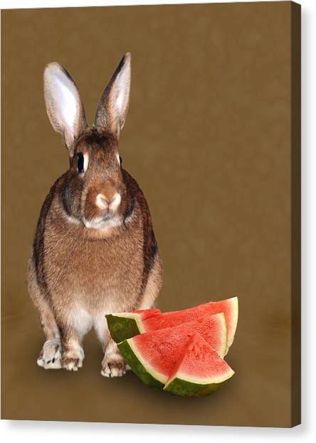 Bunny Snack Canvas Print by Diane Bell