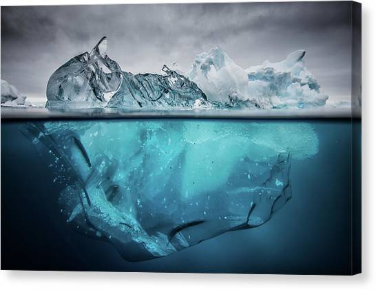 Antarctica Canvas Print - Buoyancy by Justin Hofman