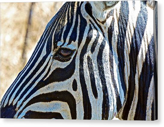 Burchell's Zebra's Face In Kruger National Park-south Africa Canvas Print