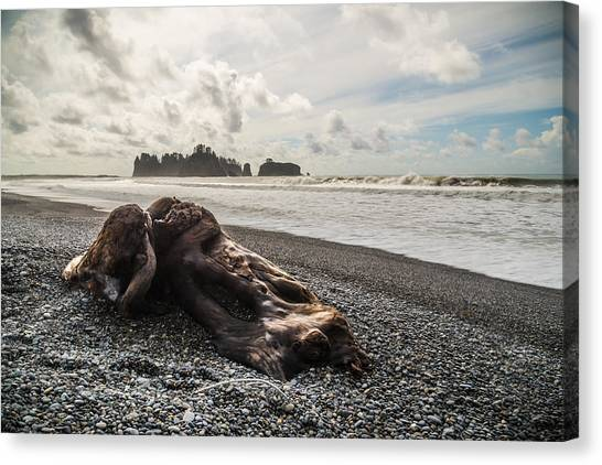 Olympic National Park Canvas Print - Buried by Kristopher Schoenleber