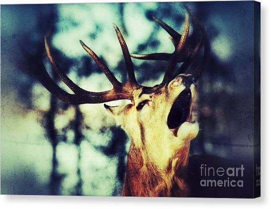 Burling Deer Canvas Print